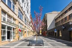 Ulica Traugutta (10)